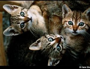 Los gatos – Hans Sylvester