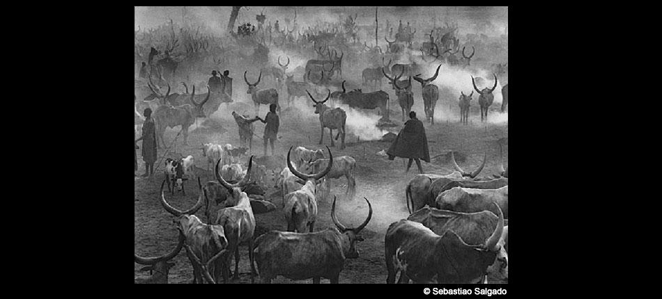 Hommes et troupeau en Afrique – Sebastiao Salgado