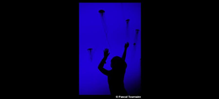 L'enfant et les méduses – Pascal Tournaire